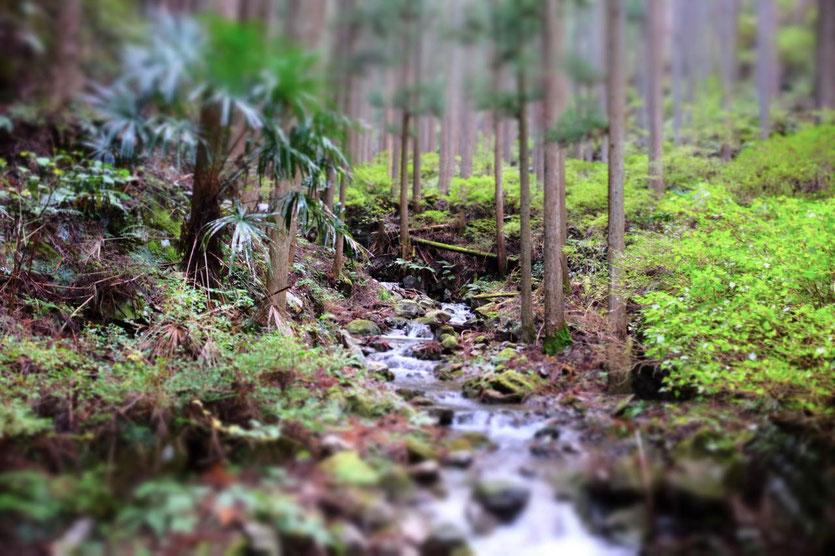 Schöner Wald Kumano Kodo Pilgerweg von Tanabe nach Hungo