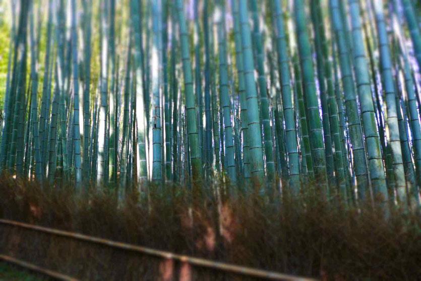 Walk Bamboo Grove Forest Arashiyama Bambuswald Kyoto Bambushain Anfahrt Öffnungszeiten Reisebericht
