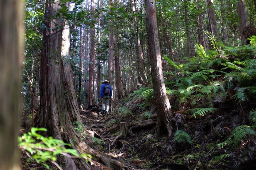 Japan Pilgerweg Kumano Kodo wandern hongu taisha