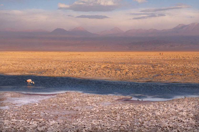 Chaxa Laguna Salar de Atacama