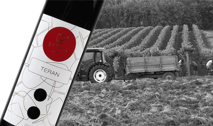 Weingut PILATO Teran Wein, Istrien