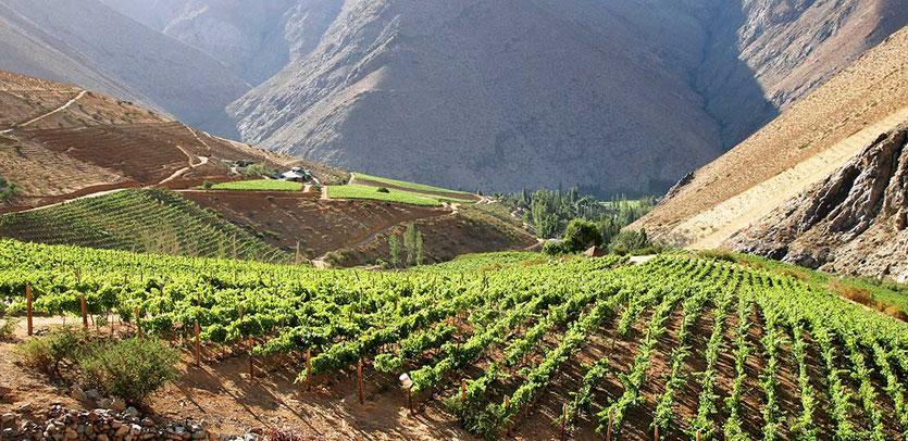 Weingut Viñedos de Alcohuaz  Valle de Elqui