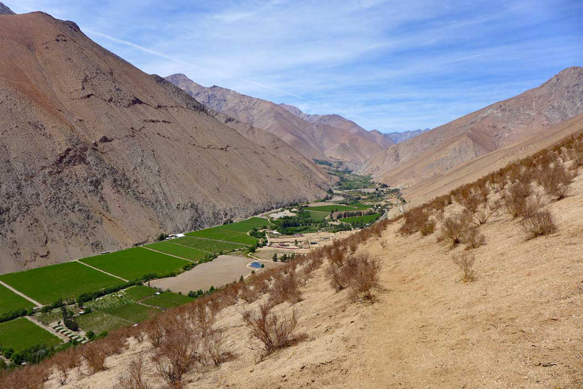 Mirador Pisco Valle del Elqui Chile