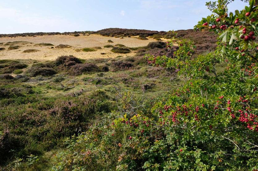 'Klein Afrika' Morsum-Kliff Wanderung Sylt