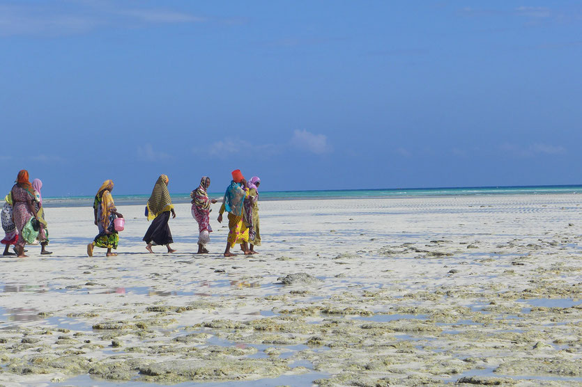Sansibar Reise Tipps Zanzibar trip