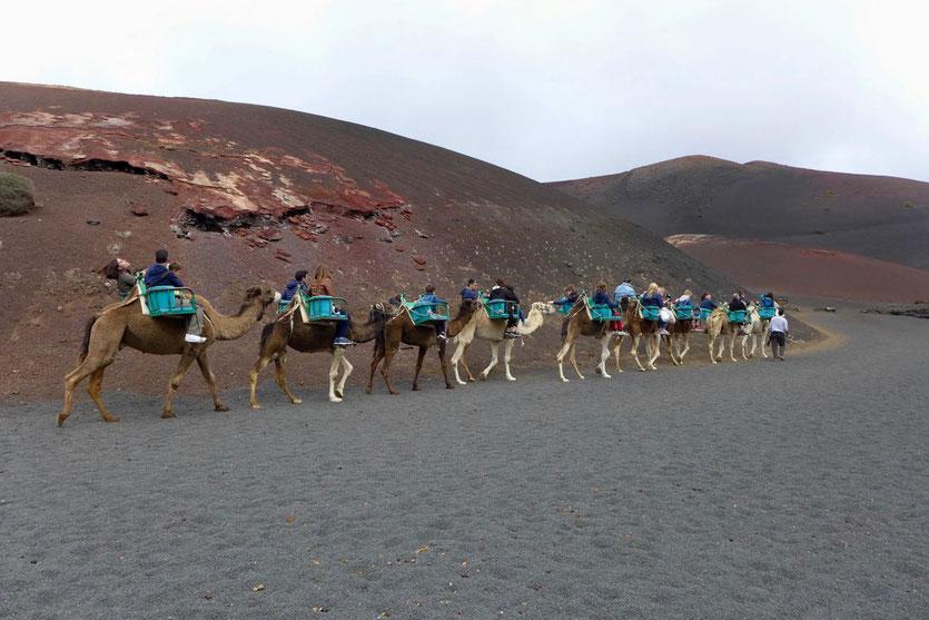 Kamelritt Tour 'Echadero de los Camellos' Timanfaya Nationalpark Lanzarote