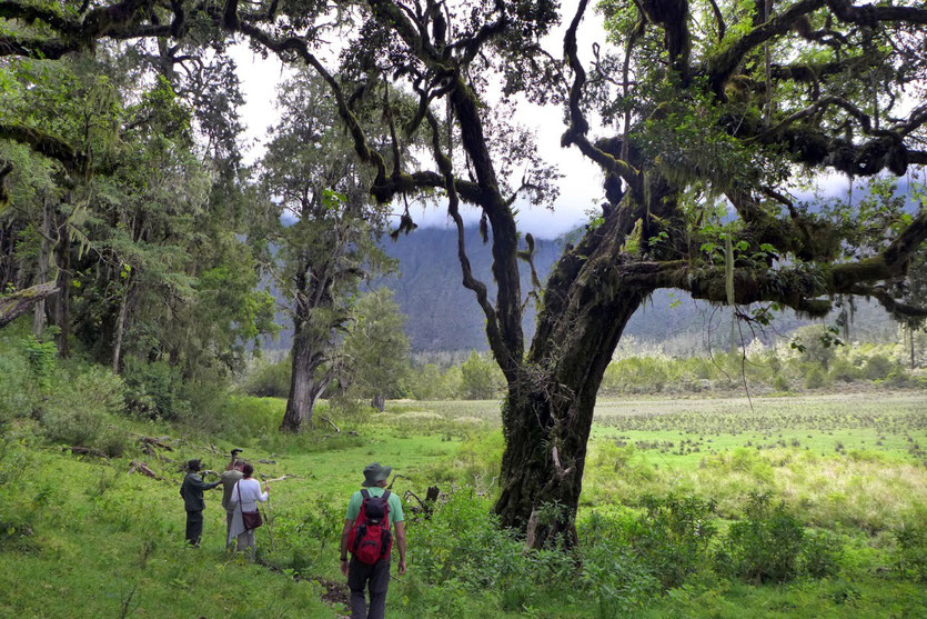 Walking Safari Mount Meru Arusha National Park attraction activities