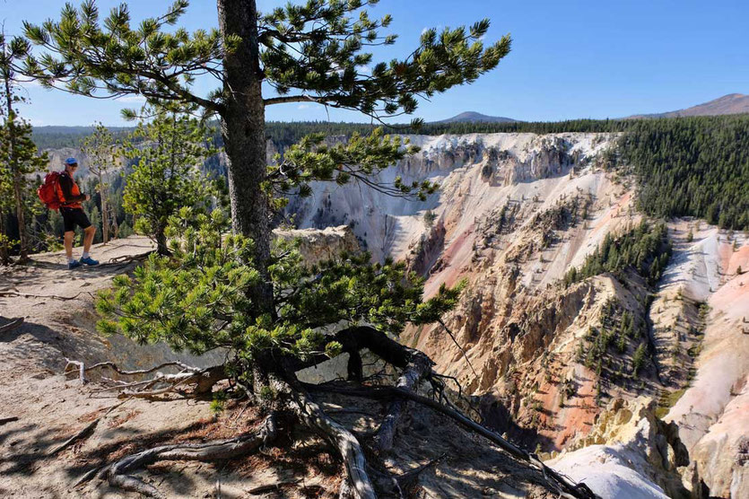 Trail Artist Point South Rim Trail Yellowstone Nationalpark