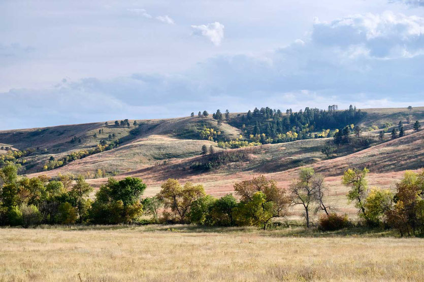 Custer State Park Hügellandschaft