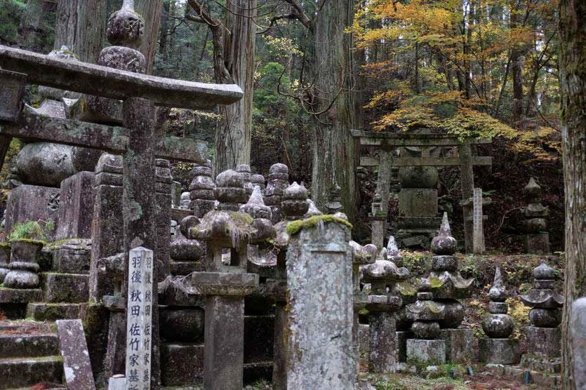 Japan Tempelübernachtung in Koyasan Steingarten Besuch alter Friedhof Okunoin