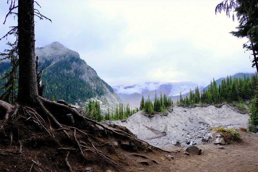 Emmons Moraine Trail - White River - Mount Rainier National Park