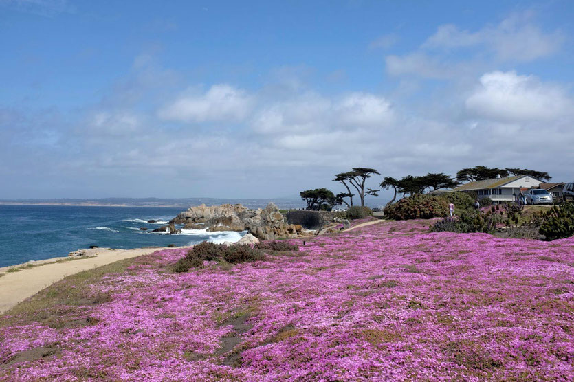 Blossoms Coast Pacific Grove, Monterey Bay