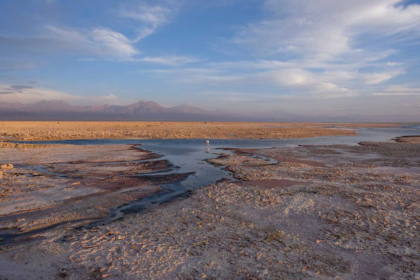 Laguna Chaxa Flamingo Salar de Atacama