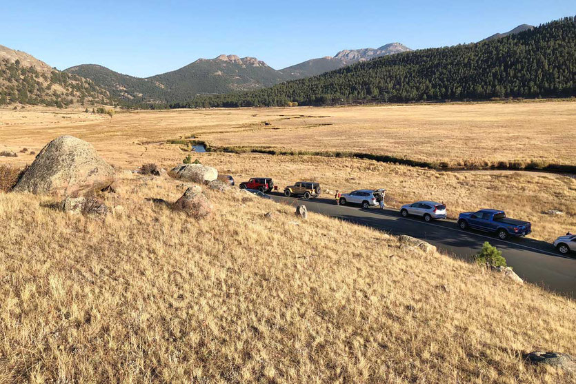 Elk Viewing Time im Moraine Park Rocky Mountain NP