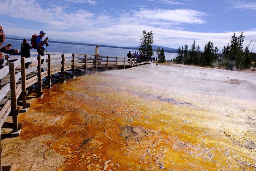 West Thumb Geysir Basin Yellowstone Nationalpark