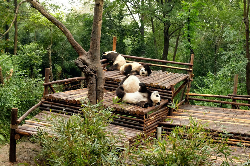 Research Base of Giant Panda Breeding chengdu
