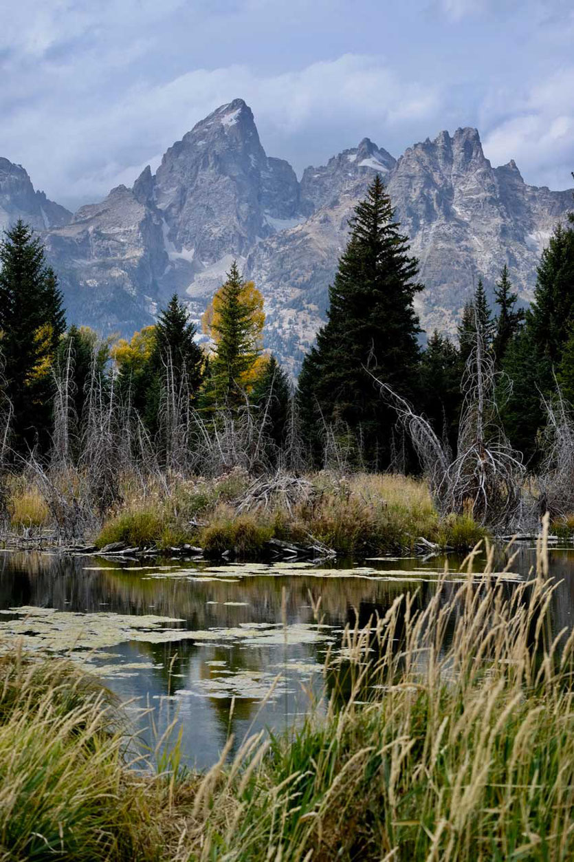 Schwabacher Landing Snake River Grand Teton