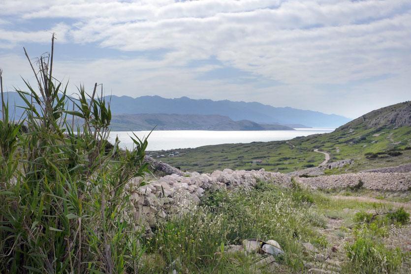 Insel Pag Trockenmauern Landschaft Camping, Kroatien