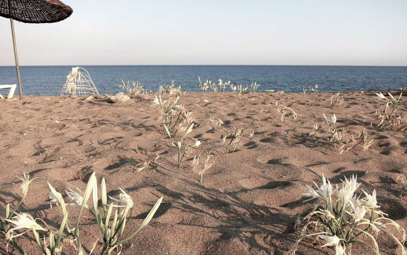 Strand von CIRALI, Türkei