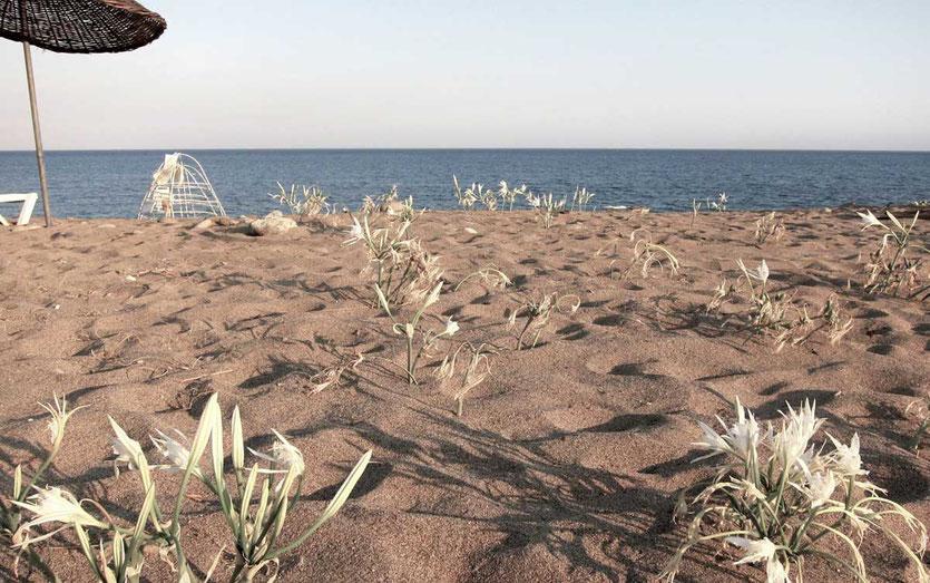 Strand von CIRALI, Türkei Lykische Küste