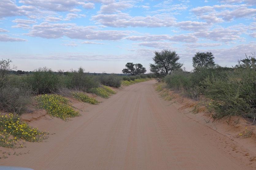 KTP park in spring Namibia