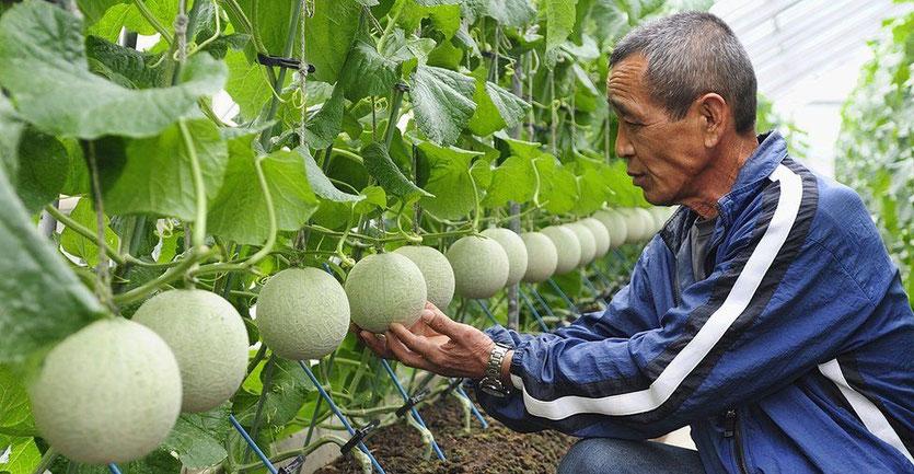 Japan's perfect fruit @ bbc.com/news/world-radio-and-tv