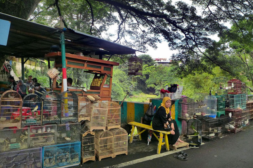 Pasar Burung Bird Market in Malang