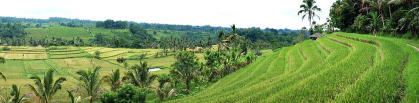Bali Reisterrassen Tour Wanderung