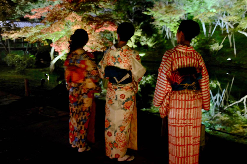 Kyoto Illumination Nights Temple Tipp Time Dates