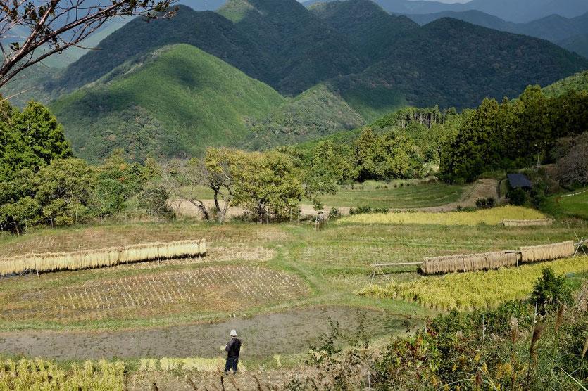 Bauern und Reisefelder am Kumano Kodo Pilgerweg nach Chikatsuyu