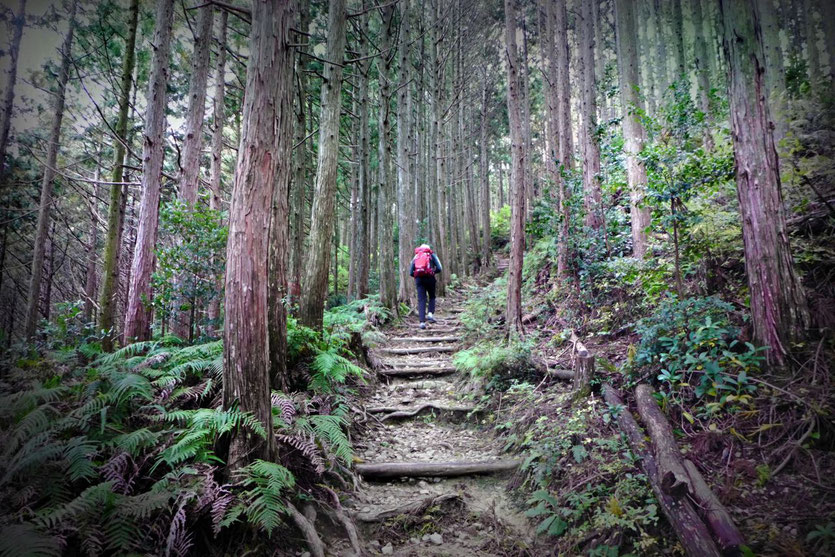 Japan Kumano Kodo Wanderung Takijiri-oji - Chikatsuyu