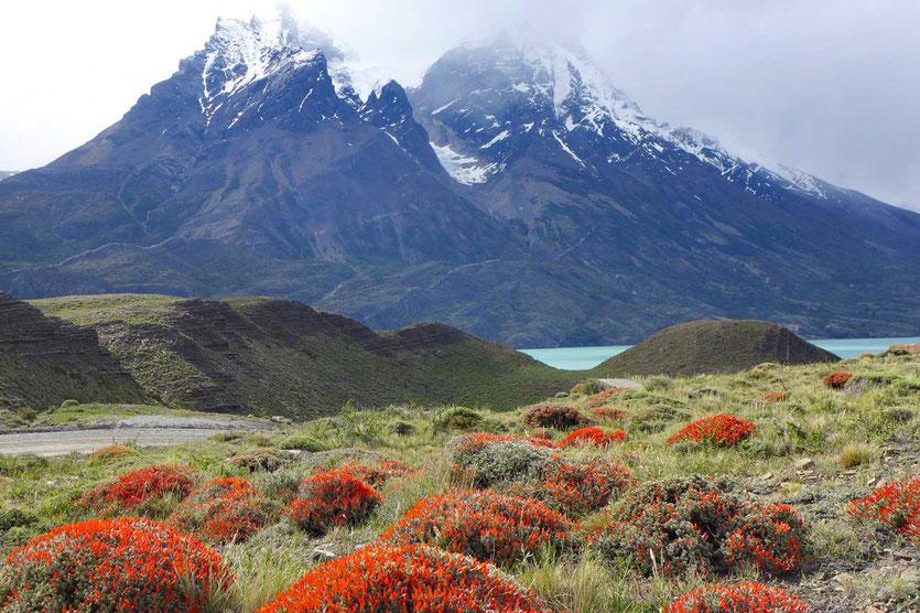 Frühling im Torres del Paine