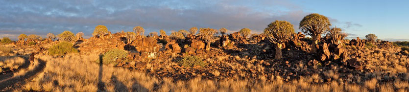 Köcherbaumwald, Mesosaurus Fossil Camp Namibia