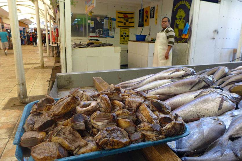 Locos Meeresschnecken Coquimba Fischmarkt