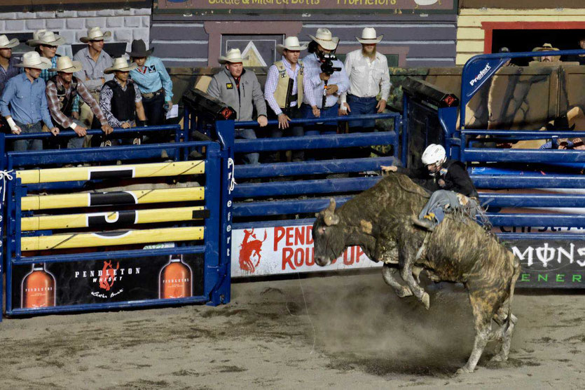Profi Bull Riding Rodeo im Happy Canyon Pendleton Oregon USA