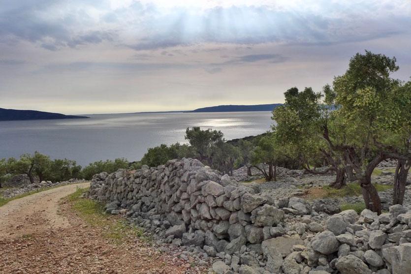 Die Schönheit der Kargheit – Die eindrucksvollen Olivenhaine unweit der Stadt Cres