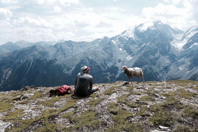 Zwiegespräch mit Schaf vor alpiner Kulisse