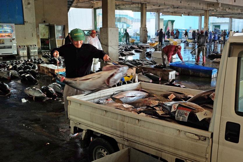 Katsuura Tuna Auction for Tourists Japan
