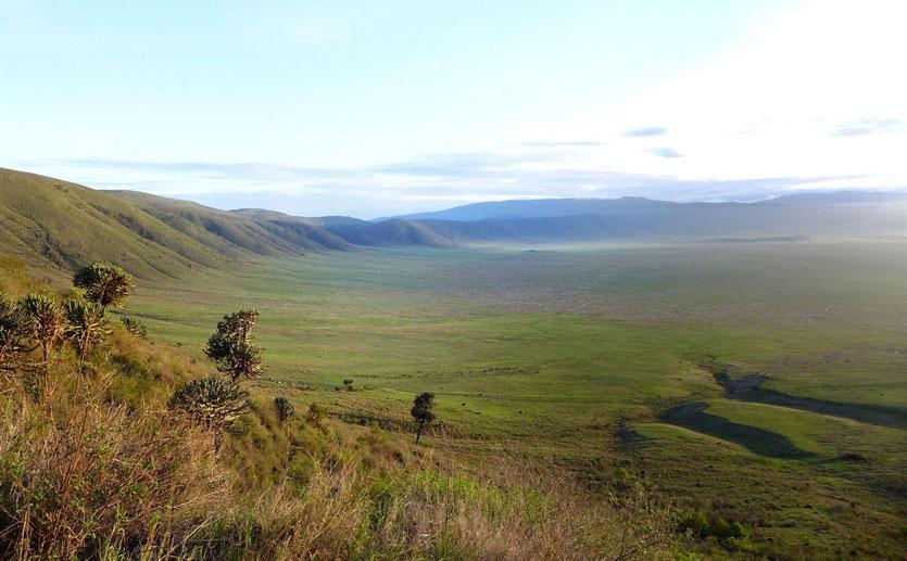 Ngorongoro Krater Caldera Tanzania