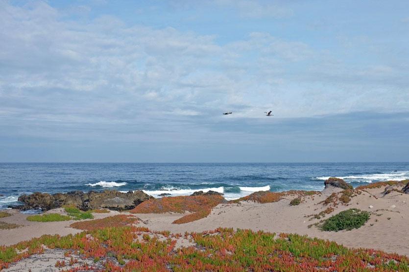 Pacific Grove, Monterey Peninsula