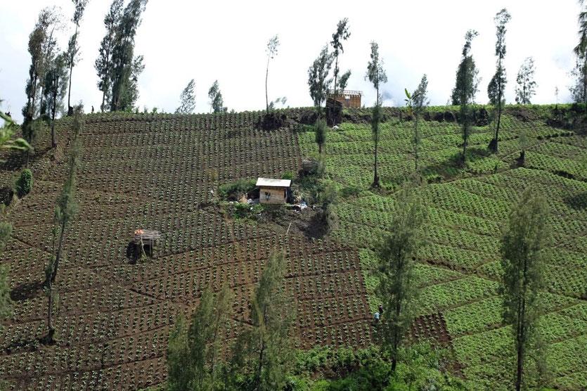 Landschaft Bromo Cemoro Lawang