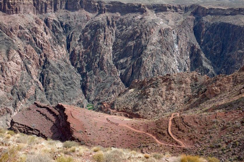 Muli Treck South Kaibab Trail Grand Canyon