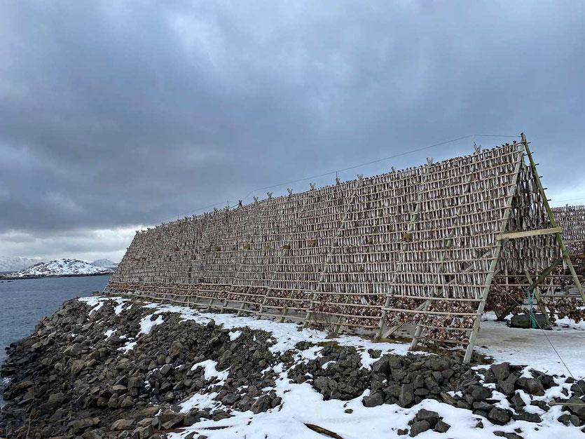 Norwegen Lofoten Stockfisch