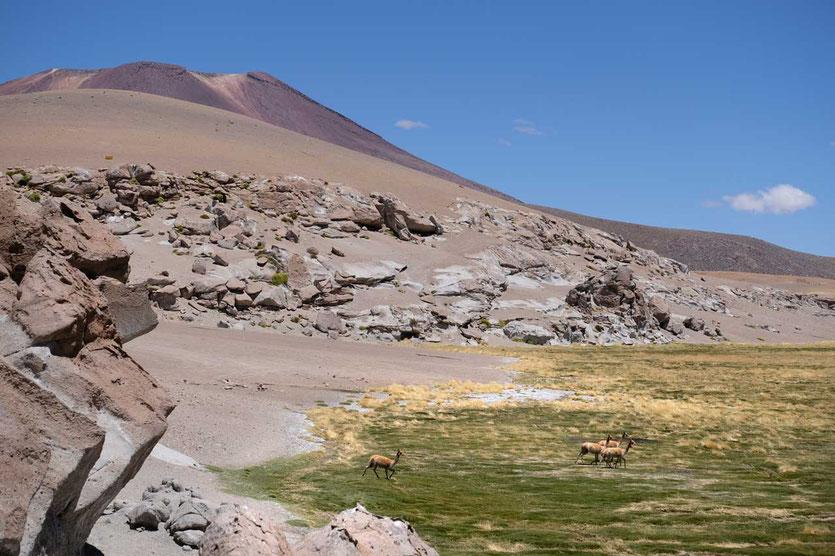 Wanderung am Rio Blanco Atacama