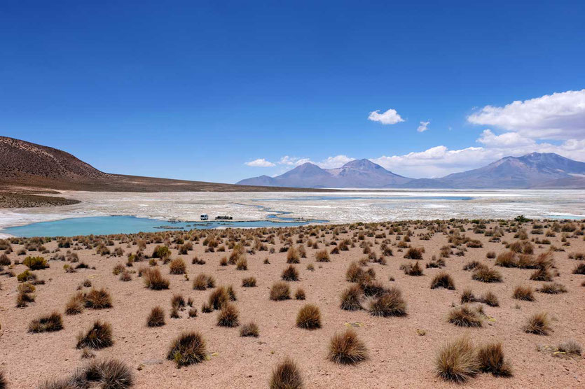 Chile Salar de Surire Thermalquelle Polloquere
