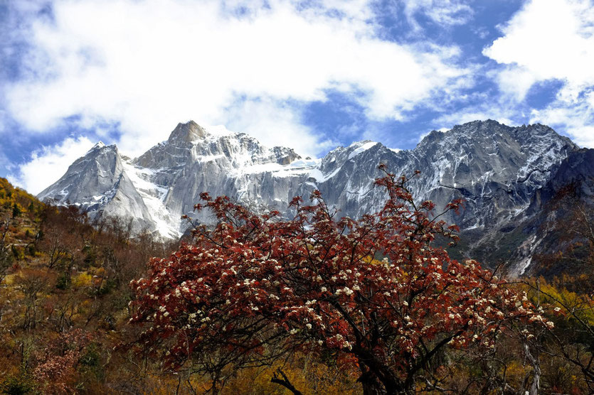 Changping Valley (长坪沟), Mount Siguniang nature reserve