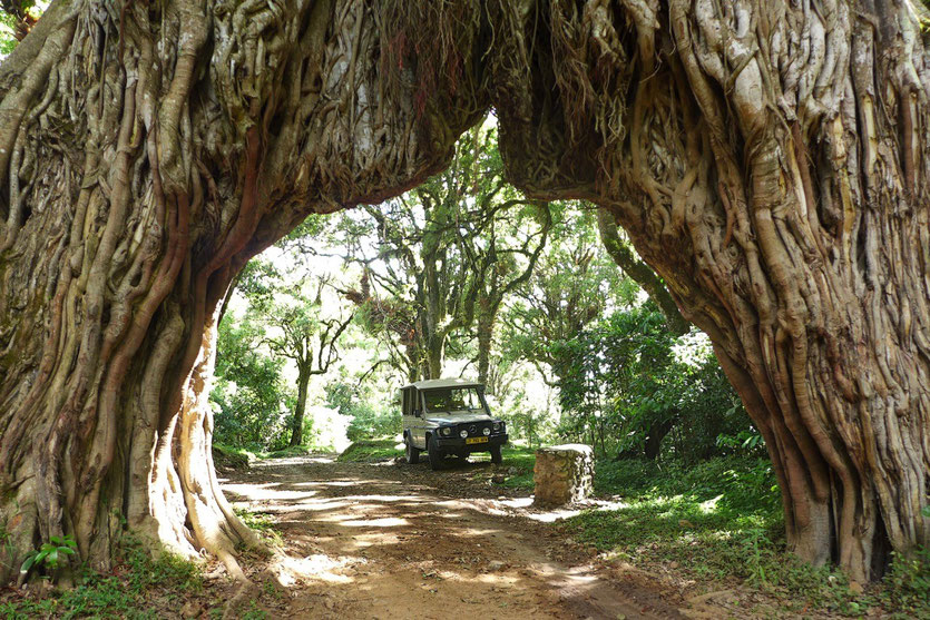 Fig Tree Arch Mount Meru Arusha Nationalpark Feigenbaum-Tor Tansania
