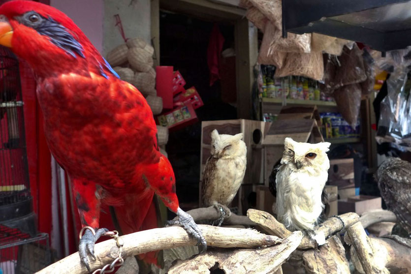 Bird market Malang Java