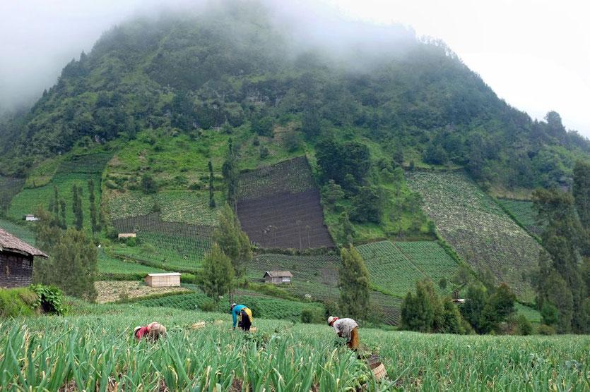 Cemoro Lawang village near bromo vulcan