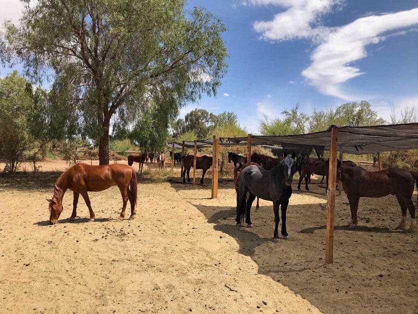 Pferde Stall explora Hotel Atacama